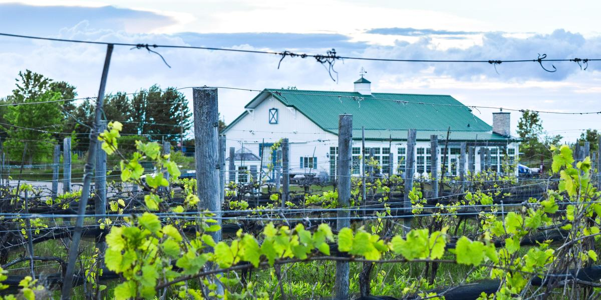 LedgeStone Vineyards wedding Green Bay