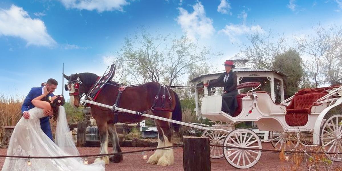 The Good Shepherd Ranch wedding Tucson
