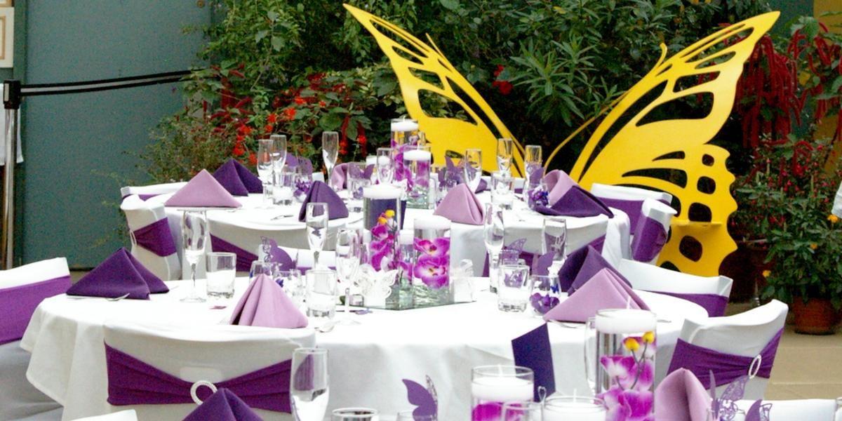 Magic Wings Butterfly Conservatory wedding Western Massachusetts