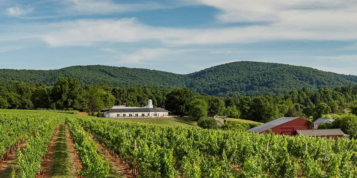 Barboursville Vineyards wedding Charlottesville