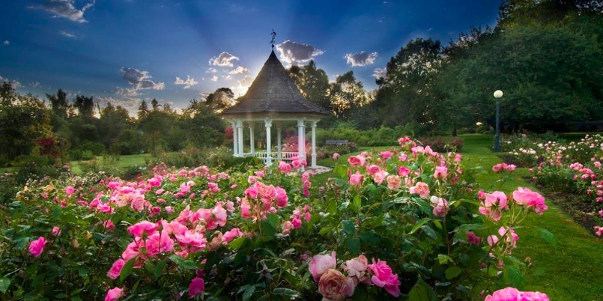 Bush Pasture Park Rose Garden Gazebo wedding Portland