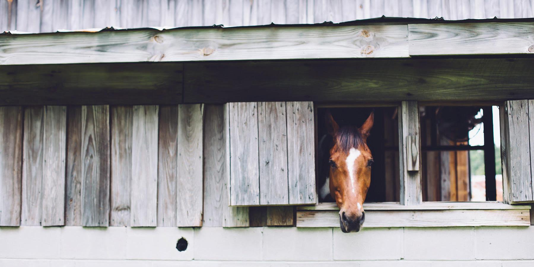 The Stables at Boals Farm wedding Charleston